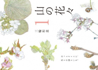 山の花々 1